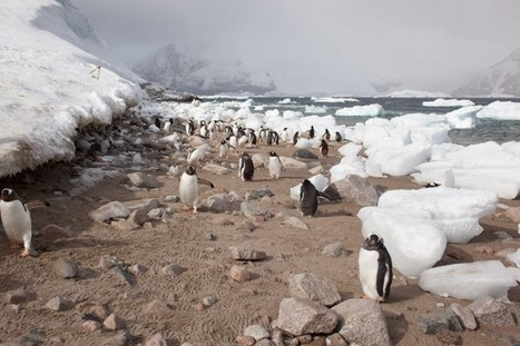 Antarctica  |  Calvings | Hurtigruten Arctique Antarctique | Scoop.it