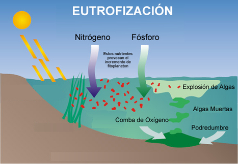 Verde Zona: Contaminación por eutrofización | Agua | Scoop.it