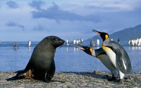 Put perverted seals with cute little penguins and you get - Oh, the horror... | Brian's Science and Technology | Scoop.it