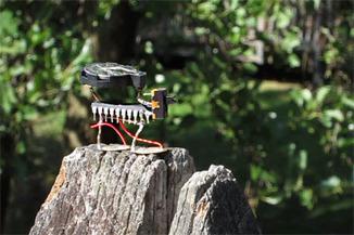 Cicadas | Sound is Art | DESARTSONNANTS - CRÉATION SONORE ET ENVIRONNEMENT - ENVIRONMENTAL SOUND ART - PAYSAGES ET ECOLOGIE SONORE | Scoop.it