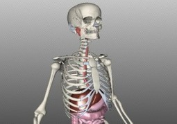 Explora el cuerpo humano en 3D.- | flresources | Scoop.it