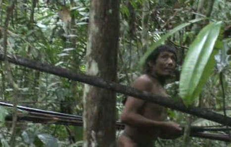 Victoire pour la tribu isolée des Kawahiva suite à la campagne de Survival | Survival International | Kiosque du monde : Amériques | Scoop.it