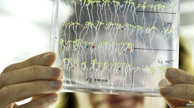 Plants 'do maths', scientists say | Interesting science | Scoop.it