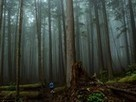 Vancouver Island, Canada -- Travel 365 -- National Geographic   tourism BC 2013   Scoop.it