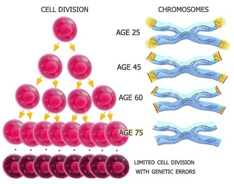 Telomerance anti-aging supplement | Great Web Stuff | Scoop.it