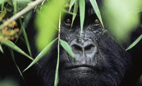 ALERT Joins Battle to Halt Nigeria's 'Highway to Hell' | Endangered species | Scoop.it