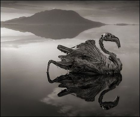 When animals die in Lake Natron they are turned into calcified statues because of the high concentration of salt | Everything Photographic | Scoop.it
