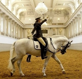 Latest News Of Spanish Riding school | Gifts | Scoop.it