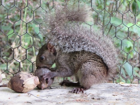 BWRC Wildlife Fundraiser | noe_ro | Scoop.it