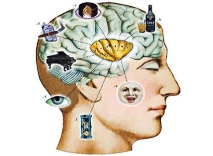The Relationship Between Cognition And Nutrition | 21st Century Concepts- Educational Neuroscience | Scoop.it