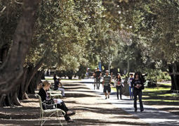 UA trees aren't just for shade anymore | Arizona Daily Star | CALS in the News | Scoop.it