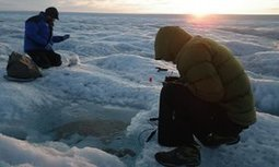 Bacteria could be speeding up the darkening of Greenland's ice | Geography | Scoop.it