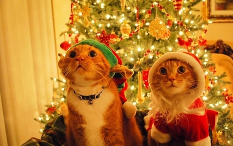 Community Post: Instagram Pets That Don't Seem Enthusiastic About Christmas | Animals Make Life Better | Scoop.it