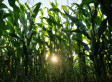 Genetically Modified Crops Have Led To Massive Pesticide Increase, Study Finds | YOUR FOOD, YOUR ENVIRONMENT, YOUR HEALTH: #Biotech #GMOs #Pesticides #Chemicals #FactoryFarms #CAFOs #BigFood | Scoop.it