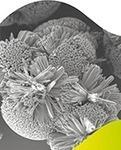Pointant la toxicité de certains nanomatériaux, l'Anses appelle à un encadrement réglementaire renforcé | Toxique, soyons vigilant ! | Scoop.it