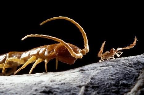 Ces créatures uniques sont nées dans une grotte restée scellée pendant 5 millions d'années | Aux origines | Scoop.it