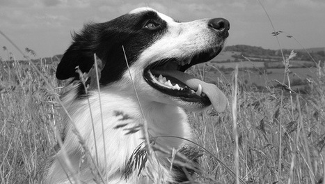10 ways owning a pet benefits your health | Veterinary News | Scoop.it
