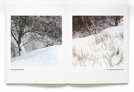 """With Trees"" by Dav Thomas, a Review 