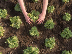 Big stink as TV's Bob says: 'Use peat on your garden'   Gardening is more than Digging the Dirt   Scoop.it