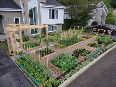 Cinq étapes pour réussir son potager urbain | Jardins urbains | Scoop.it
