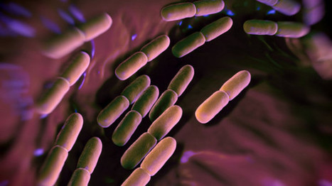 Omega-3 could help support 'friendly bacteria' in the gut | Longevity science | Scoop.it