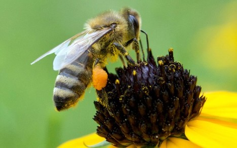 Bees 'producing M&M's coloured honey'   No Such Thing As The News   Scoop.it