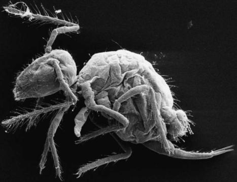 Tres nuevos artrópodos, reliquias del pasado | curiosidades científicas | Scoop.it