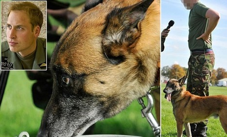 Two guard dogs that protected Prince William on RAF duty are destroyed | Dogs | Scoop.it