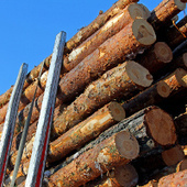 Ontario experiencing delays in shipping forest products to United States | Timberland Investment | Scoop.it