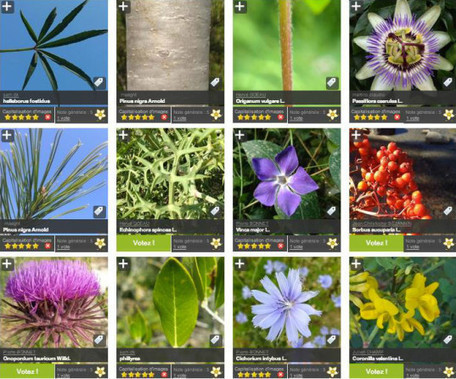 Pl@ntNet app lets smartphone users identify flora with click of the camera | Mobile: Recruitment and Applications | Scoop.it