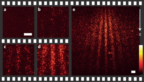Wave-particle duality first time visualized in quantum movie | Amazing Science | Scoop.it