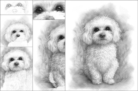 How to Draw a Maltese   Art Life   Scoop.it