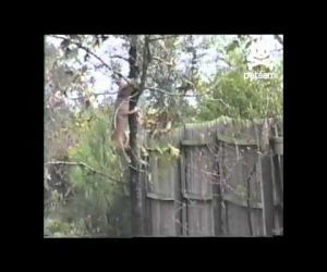 Dog Climbs Tree Like A Squirrel : Video Clips From The Coolest One | enjoy yourself | Scoop.it