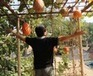 Rooftop Gardens Pop Up in Beijing and Hong Kong | Vertical Farm - Food Factory | Scoop.it