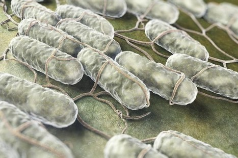 Scientists Have Discovered THIRTY FIVE New Bacterial Phyla | Media Cultures: Microbiology in the news | Scoop.it