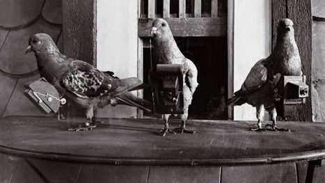 When pets get drafted: the bizarre history of animal soldiers | Gavagai | Scoop.it