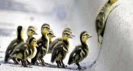 Liderlik, gençlik ve duygusal zeka | Kişisel Başarı | kişisel başarı | Scoop.it