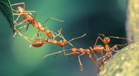 Optimiser les réseaux de distribution grâce aux fourmis | EntomoNews | Scoop.it