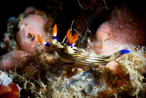 5 steps to underwater photos (that don't suck!) - imaging resource | ScubaDiving | Scoop.it
