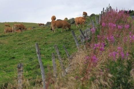 Le parc naturel de l'Aubrac prend soin de ses paysages | L'info tourisme en Aveyron | Scoop.it