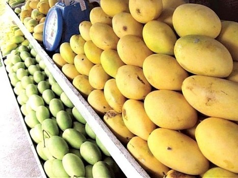 New destination: Pakistani mangoes to be sold in Walmart China – The Express Tribune | Trade Information News | Scoop.it