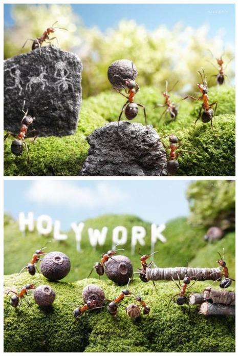 Le mystérieux monde des fourmis, par Andrey Pavlov | Graine de Photographe The Blog | Photographie de grossesse, d'enfant et photomanipulation | Scoop.it