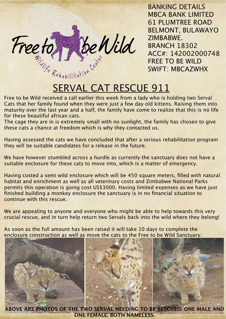 Serval Cat Rescue 911 - Immediate Need For Help | Wildlife Conservation: People and Stories | Scoop.it