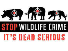 Hong Kong Ivory Bust Underscores Global Scale of Wildlife Crime   Wildlife Trafficking: Who Does it? Allows it?   Scoop.it