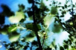 Phonotographie » Le chant des feuilles du peuplier | DESARTSONNANTS - CRÉATION SONORE ET ENVIRONNEMENT - ENVIRONMENTAL SOUND ART - PAYSAGES ET ECOLOGIE SONORE | Scoop.it