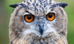 Lark or owl, working nine-to-five will make you tired | Careers & Employability | Scoop.it