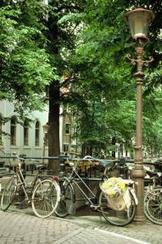 Stress? Kijk naar een boom | HR Praktijk | verzorgingsstaat4 | Scoop.it