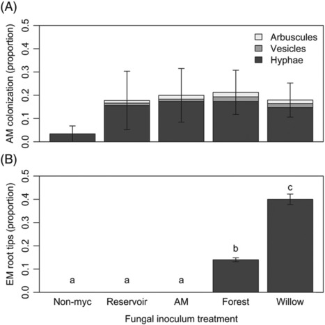Availability and function of arbuscular mycorrhizal and ectomycorrhizal fungi during revegetation of dewatered reservoirs left after dam removal | Plant-Microbe Symbiosis | Scoop.it