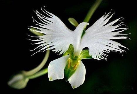 17 Magnifiques fleurs qui ressemblent à tout, sauf à des fleurs | Ca m'interpelle... | Scoop.it
