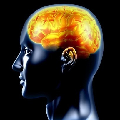 20 Curiosidades sobre el Cerebro Humano | Interes general | Scoop.it